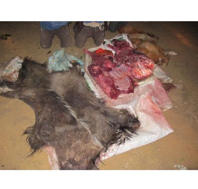 Ezemvelo KZN Wildlife