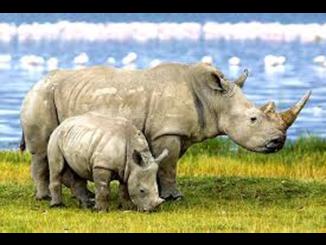Project Rhino KZN